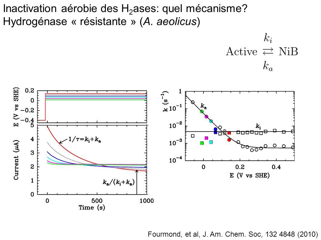 Inactivation aérobie des H2ases: quel mécanisme