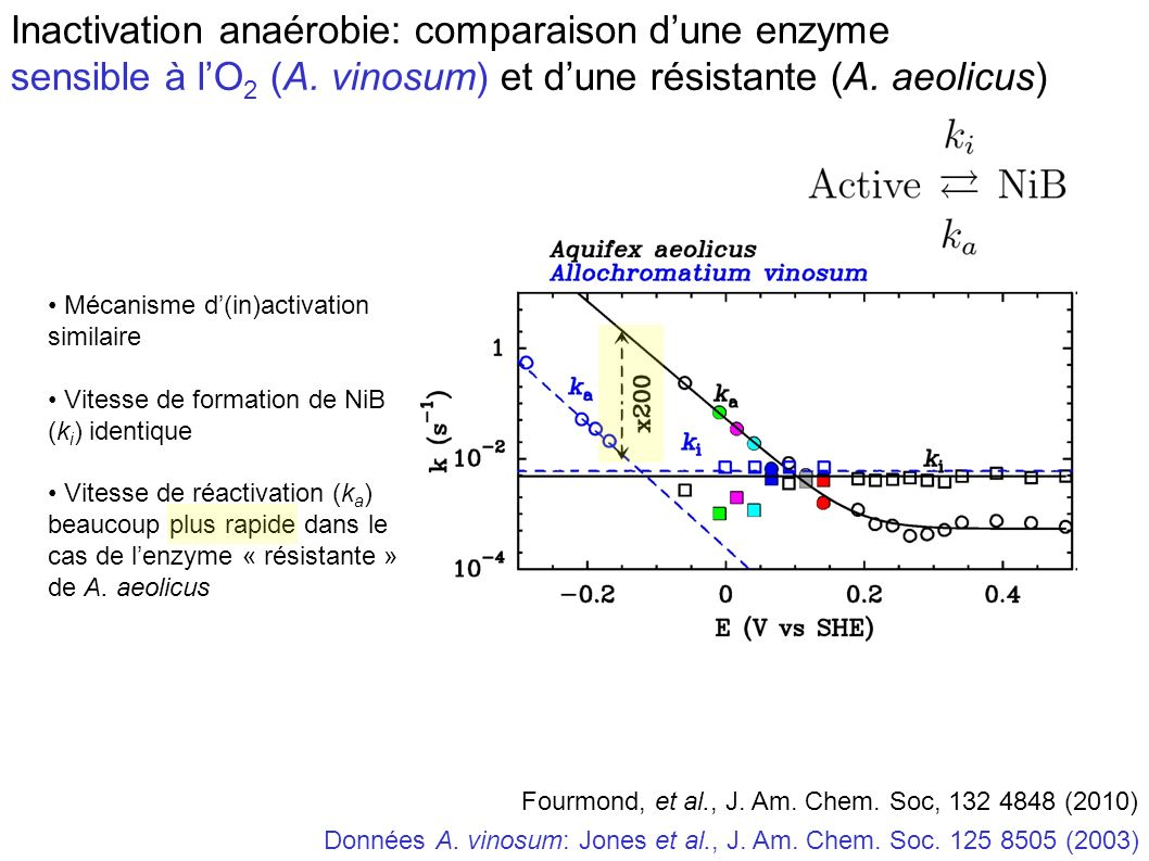 Inactivation anaérobie: comparaison d'une enzyme sensible à l'O2 (A