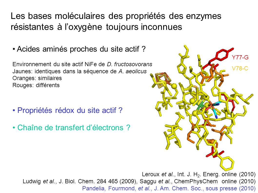 Les bases moléculaires des propriétés des enzymes résistantes à l'oxygène toujours inconnues
