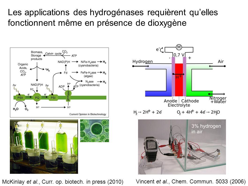 Les applications des hydrogénases requièrent qu'elles fonctionnent même en présence de dioxygène