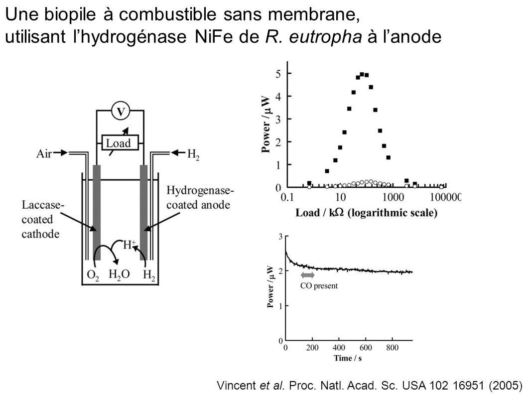 Une biopile à combustible sans membrane, utilisant l'hydrogénase NiFe de R. eutropha à l'anode