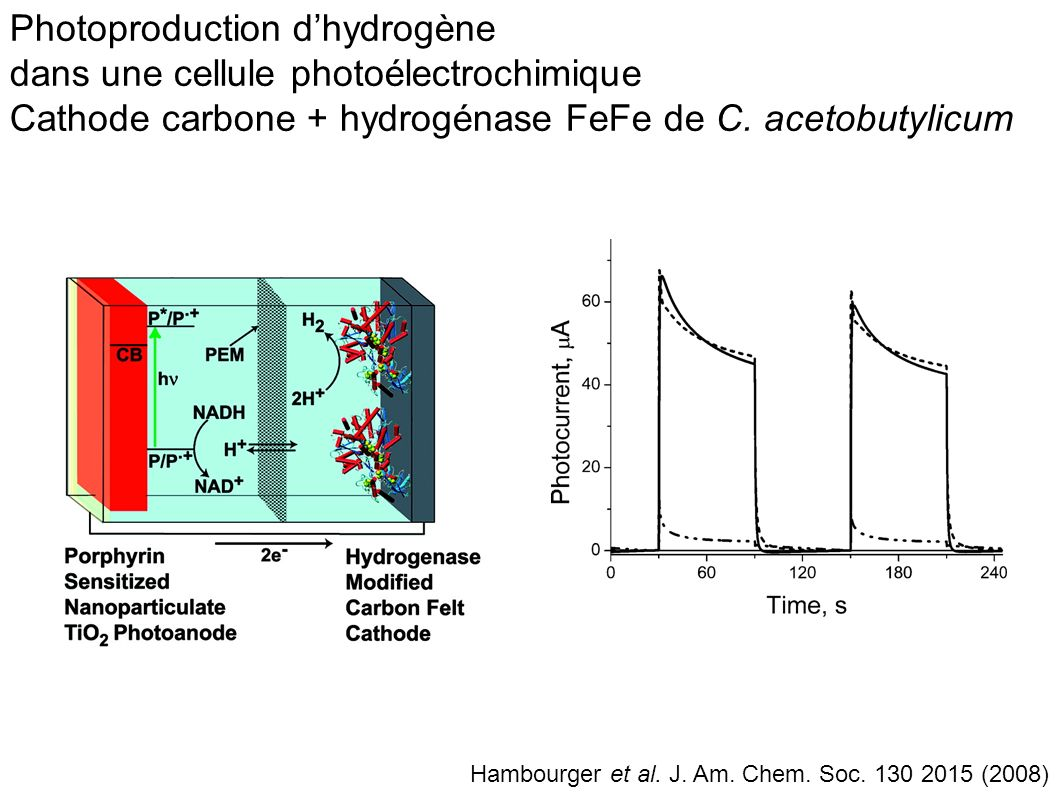 Photoproduction d'hydrogène dans une cellule photoélectrochimique Cathode carbone + hydrogénase FeFe de C. acetobutylicum