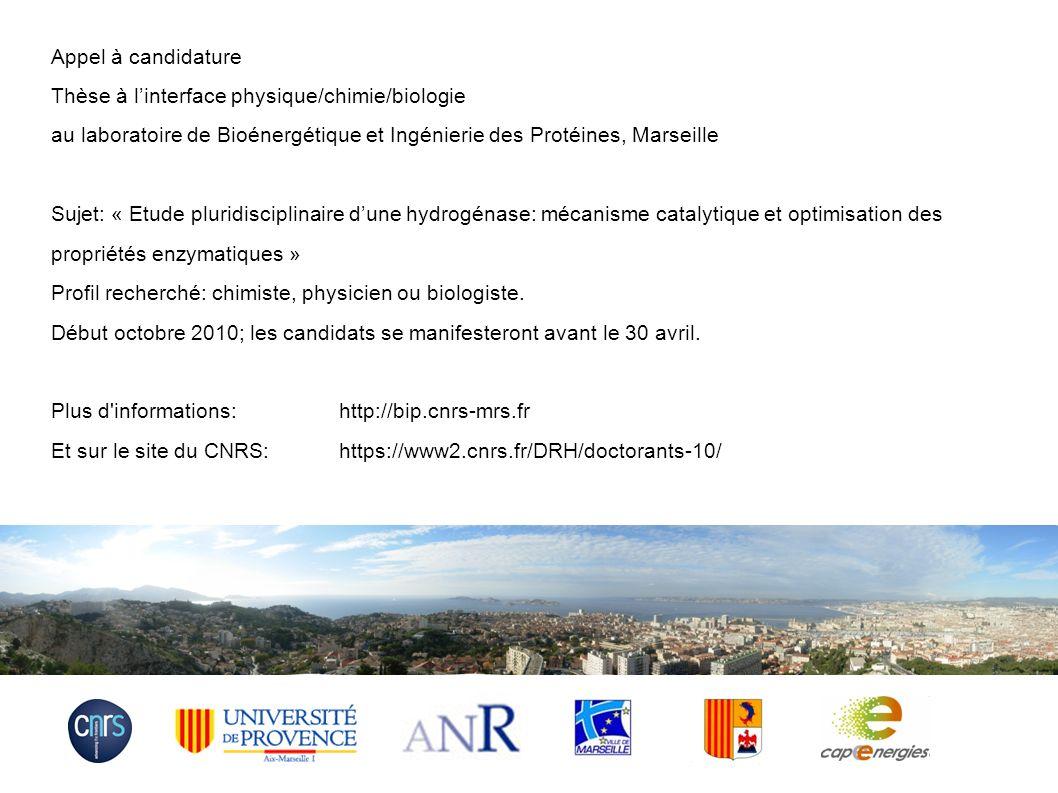 Appel à candidature Thèse à l'interface physique/chimie/biologie. au laboratoire de Bioénergétique et Ingénierie des Protéines, Marseille.