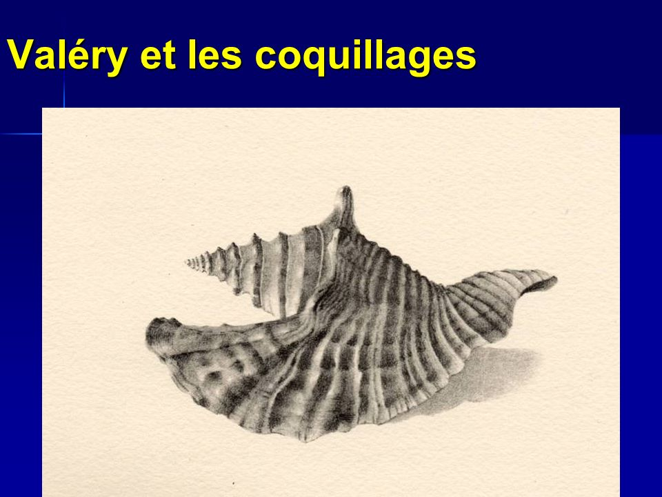 Valéry et les coquillages