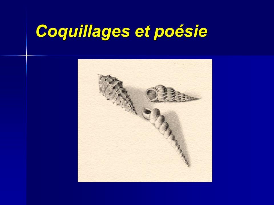 Coquillages et poésie