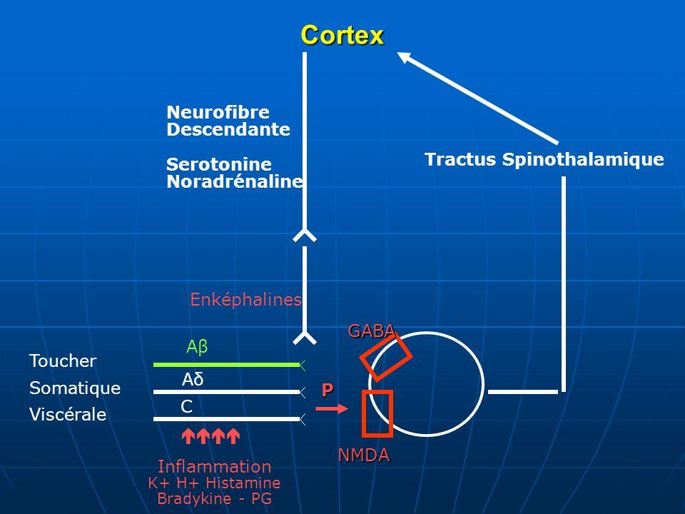 Cortex Neurofibre Descendante Serotonine Noradrénaline