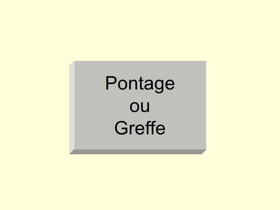 Pontage ou Greffe