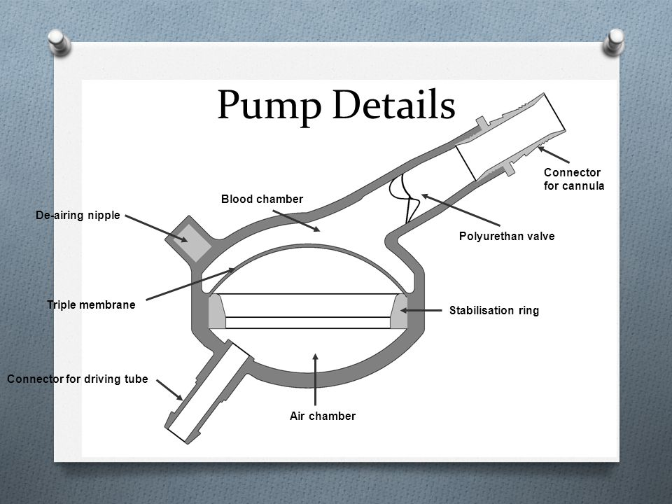 Pump Details Connector for cannula Blood chamber De-airing nipple