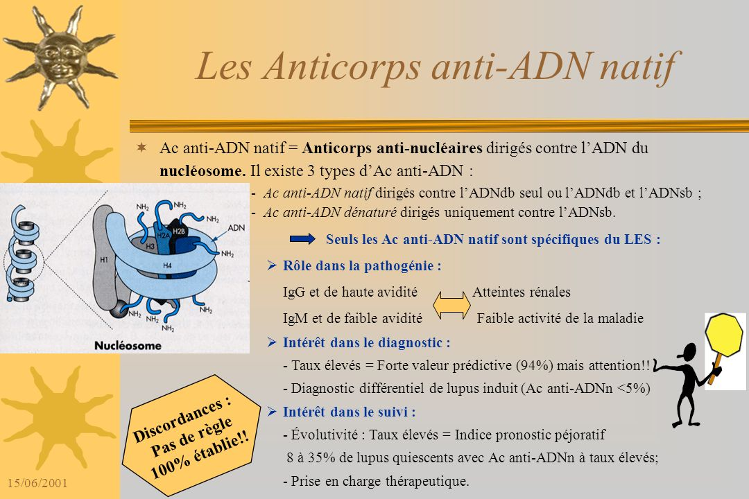 Les Anticorps anti-ADN natif