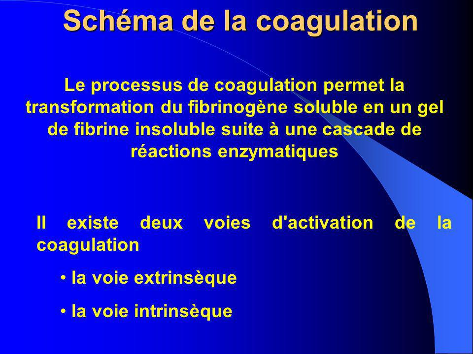 Schéma de la coagulation