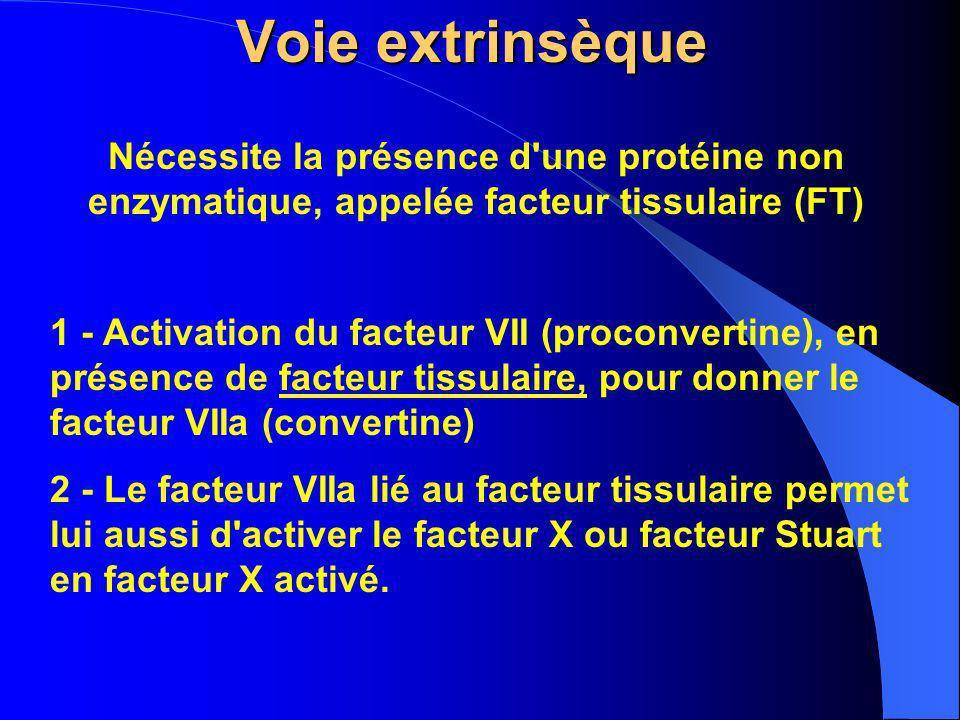 Voie extrinsèque Nécessite la présence d une protéine non enzymatique, appelée facteur tissulaire (FT)