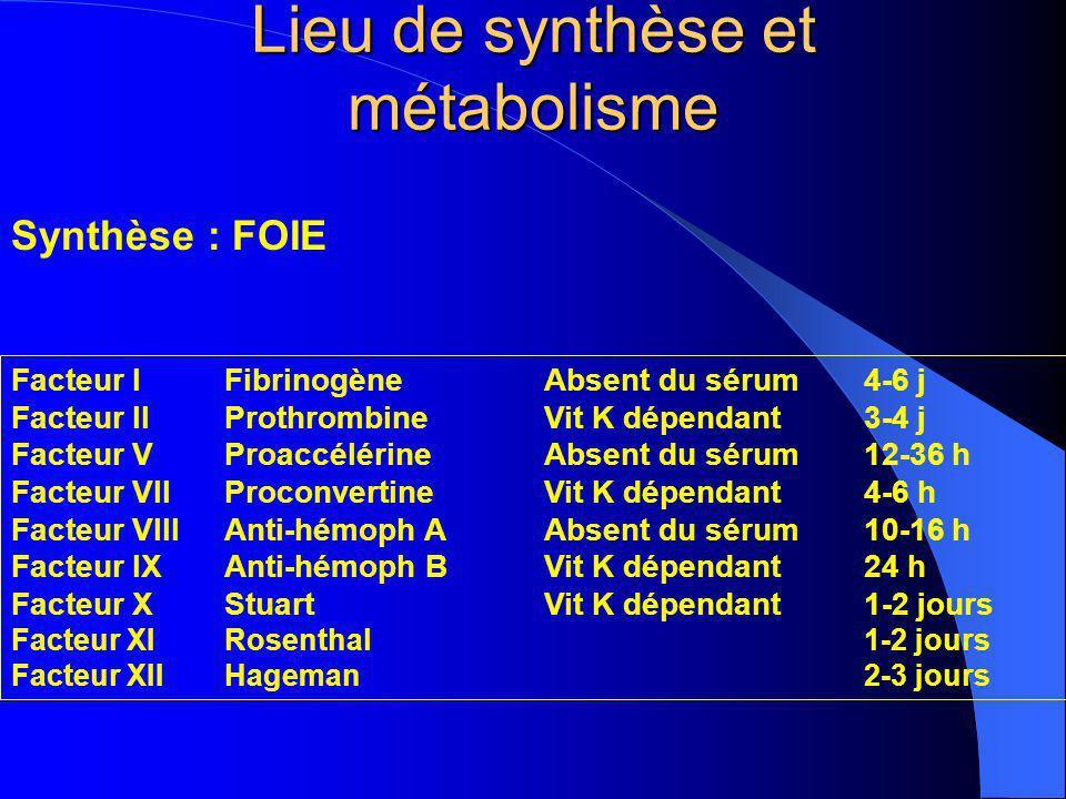 Lieu de synthèse et métabolisme