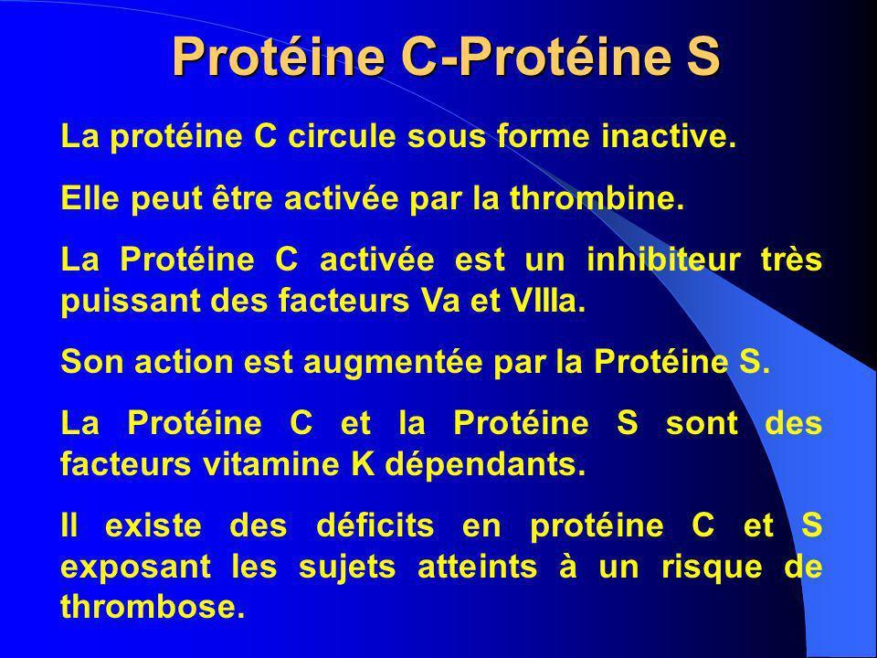 Protéine C-Protéine S La protéine C circule sous forme inactive.