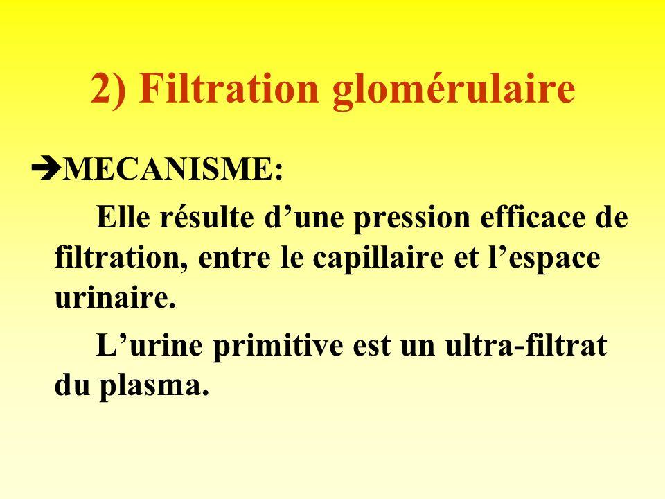 2) Filtration glomérulaire