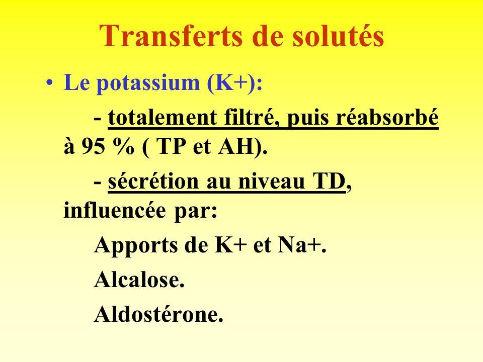 Transferts de solutés Le potassium (K+):