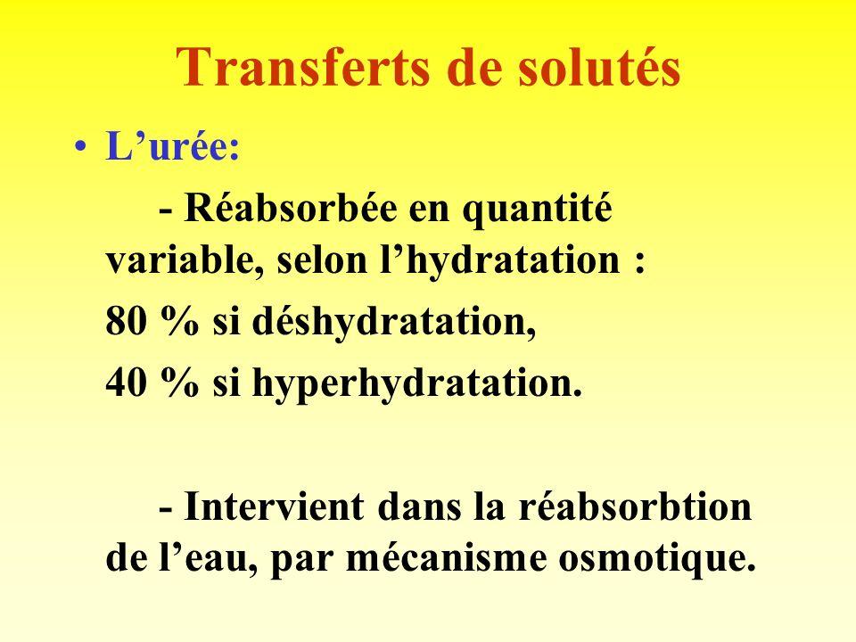 Transferts de solutés L'urée: