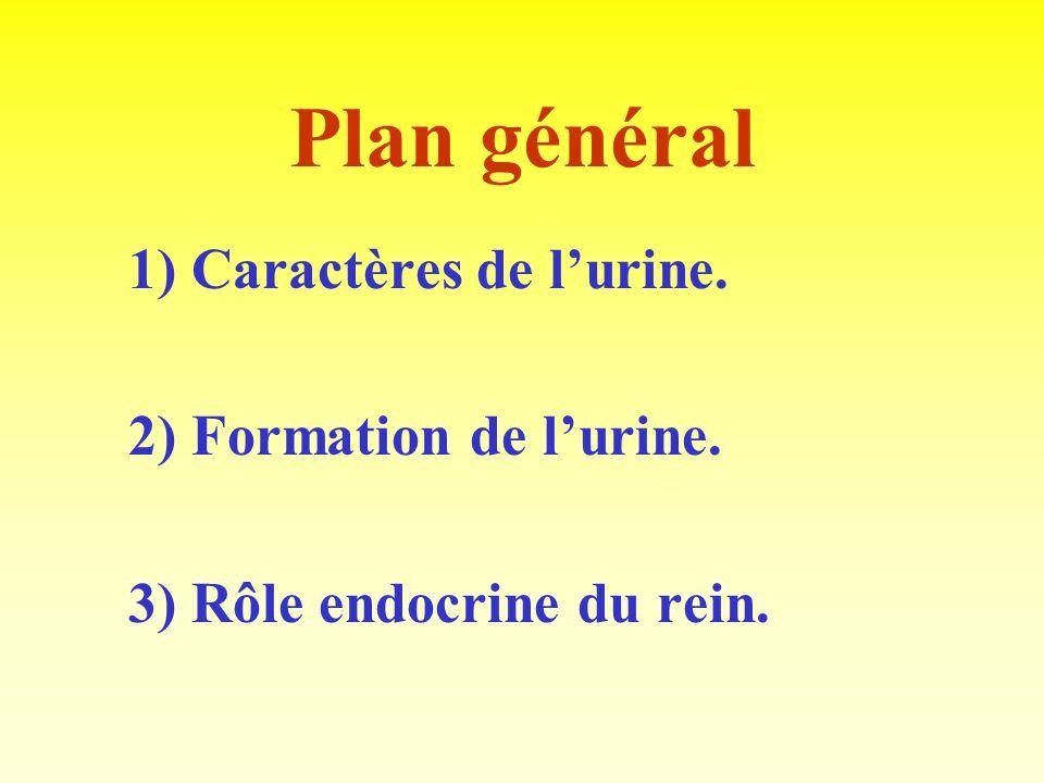 Plan général 2) Formation de l'urine. 3) Rôle endocrine du rein.