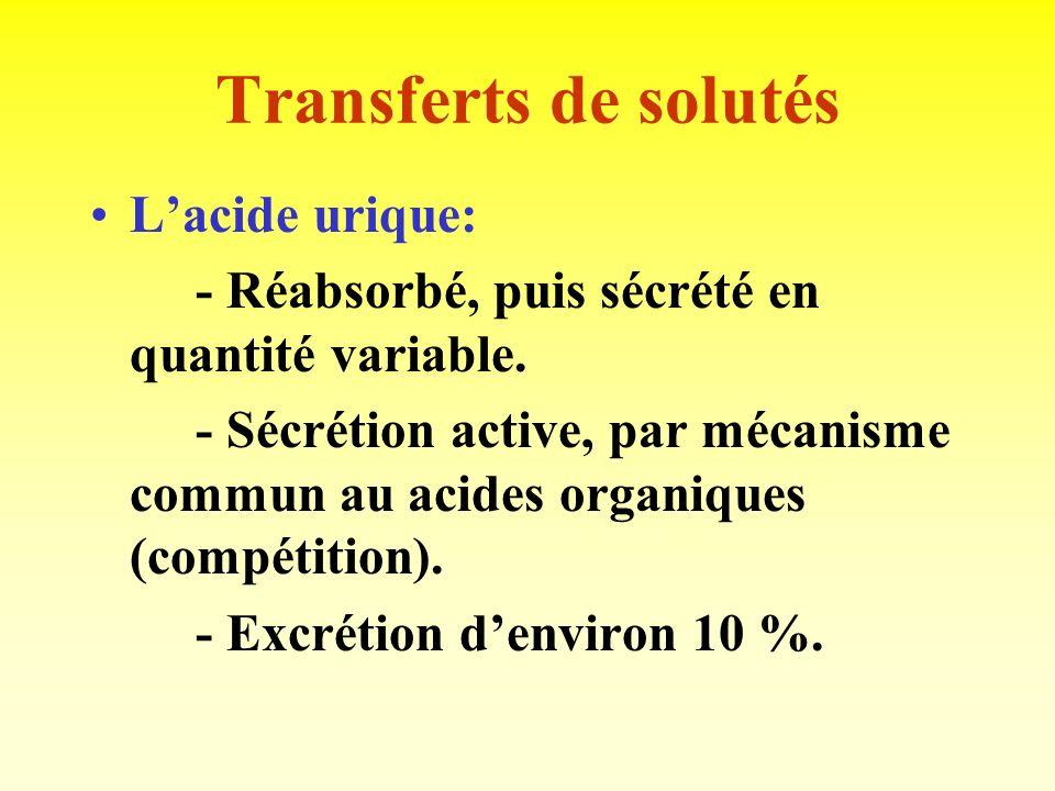 Transferts de solutés L'acide urique: