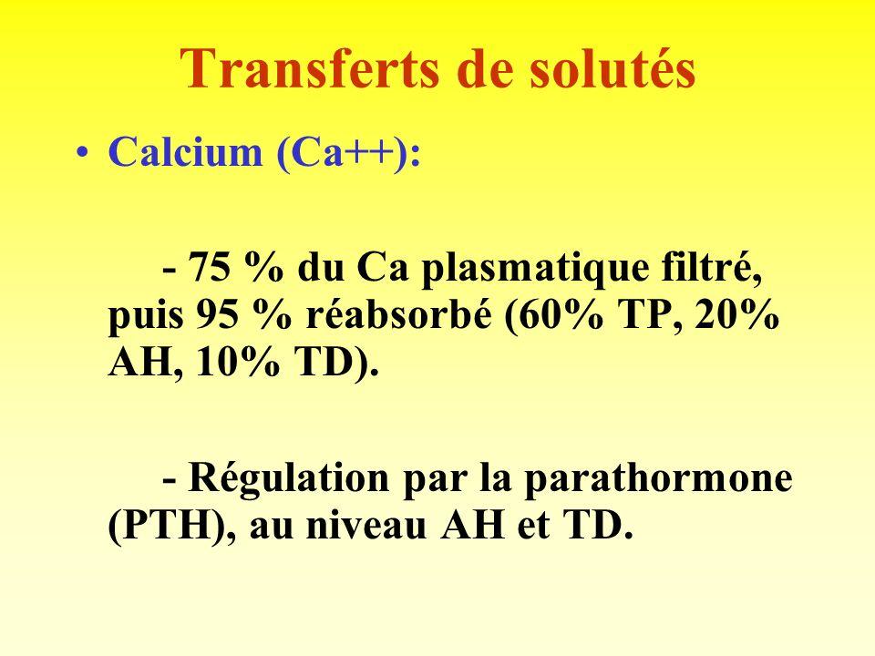 Transferts de solutés Calcium (Ca++):
