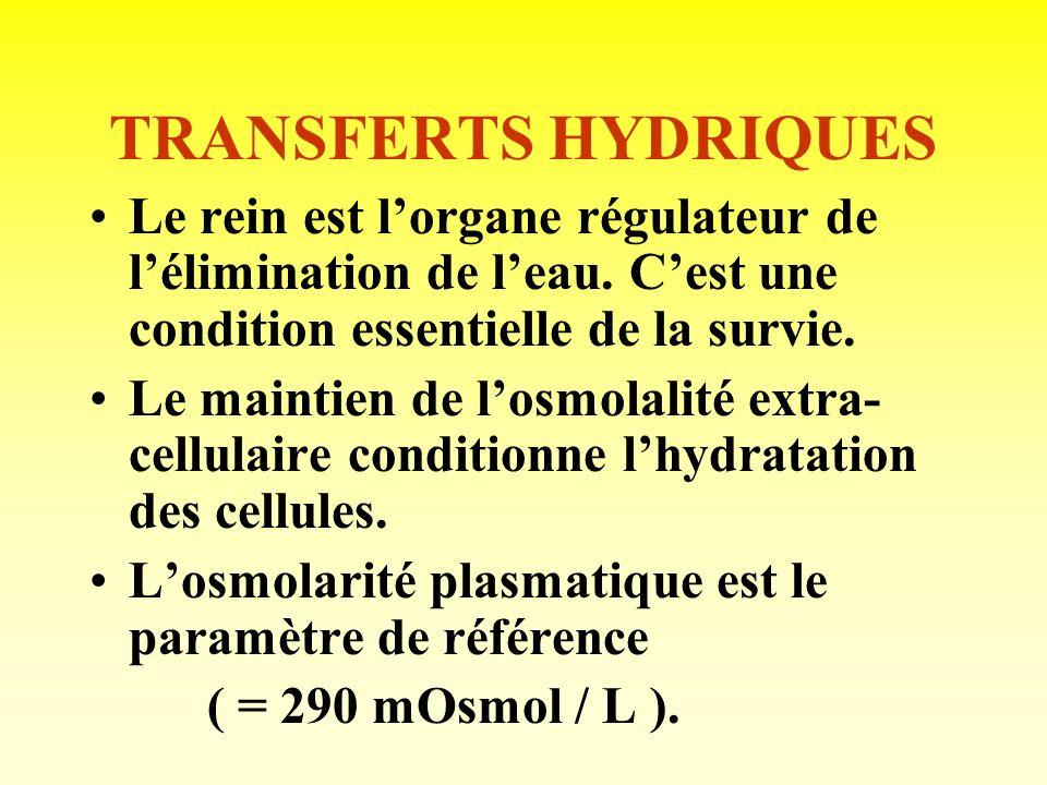 TRANSFERTS HYDRIQUES Le rein est l'organe régulateur de l'élimination de l'eau. C'est une condition essentielle de la survie.