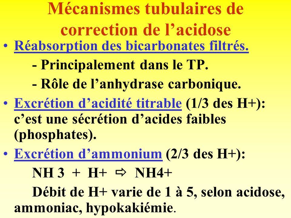 Mécanismes tubulaires de correction de l'acidose