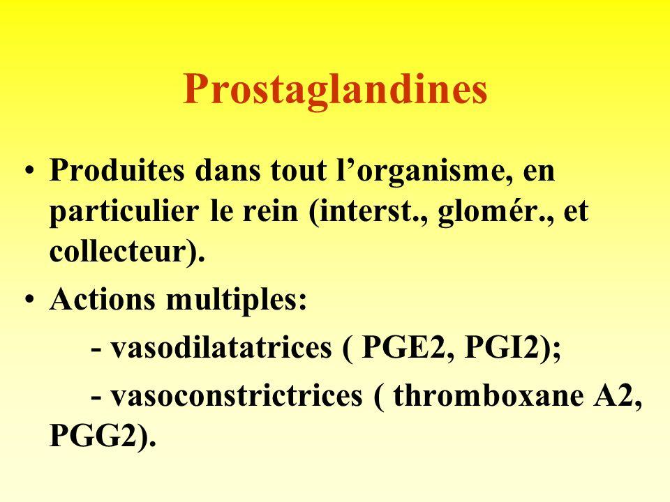 Prostaglandines Produites dans tout l'organisme, en particulier le rein (interst., glomér., et collecteur).