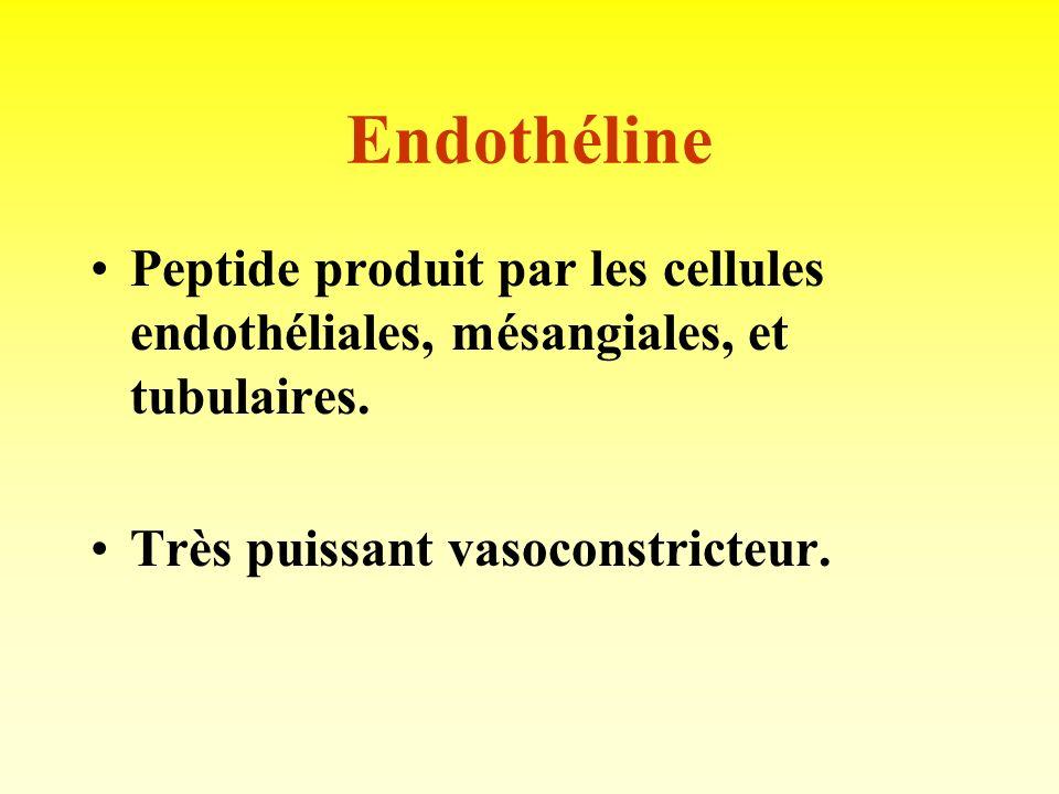 Endothéline Peptide produit par les cellules endothéliales, mésangiales, et tubulaires.