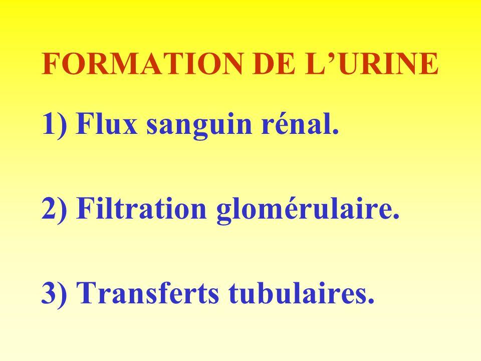 FORMATION DE L'URINE 1) Flux sanguin rénal. 2) Filtration glomérulaire. 3) Transferts tubulaires.