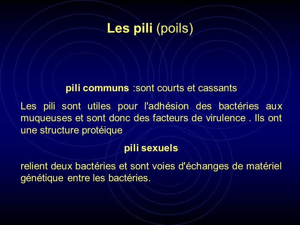 pili communs :sont courts et cassants