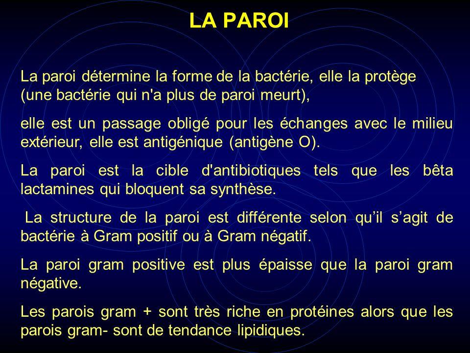 LA PAROI La paroi détermine la forme de la bactérie, elle la protège (une bactérie qui n a plus de paroi meurt),