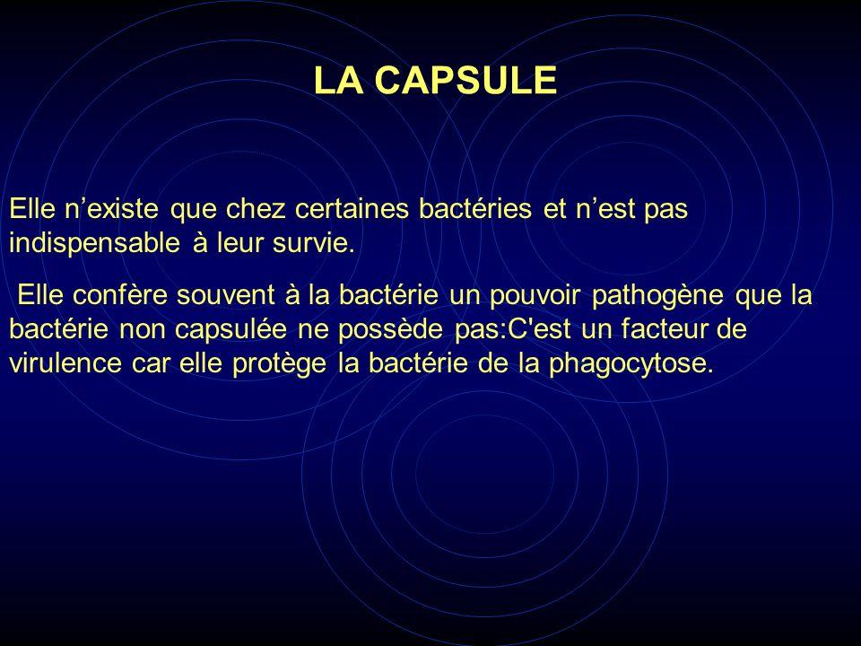 LA CAPSULE Elle n'existe que chez certaines bactéries et n'est pas indispensable à leur survie.