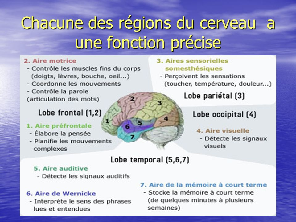 Chacune des régions du cerveau a une fonction précise