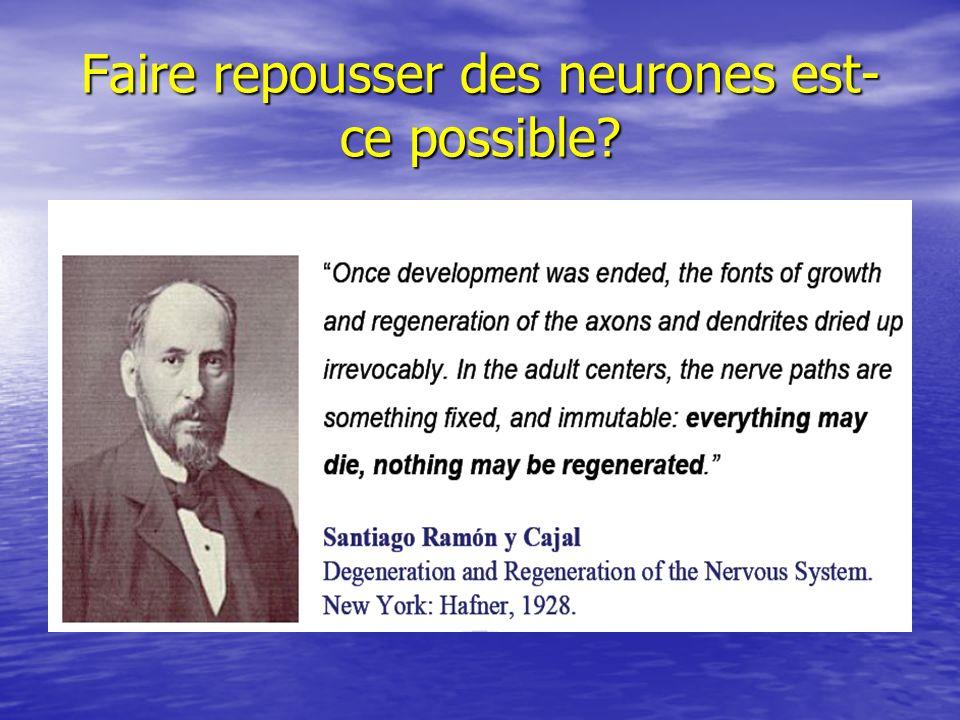 Faire repousser des neurones est-ce possible