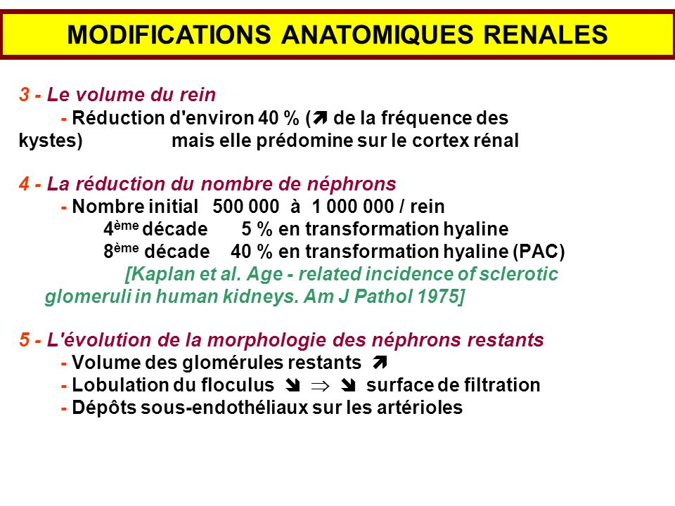 MODIFICATIONS ANATOMIQUES RENALES