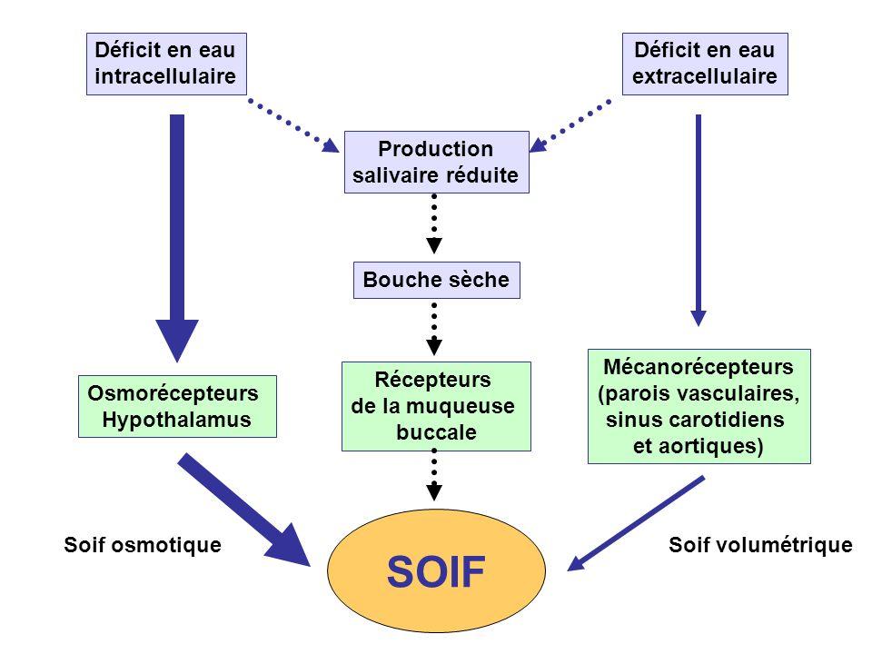 SOIF Déficit en eau intracellulaire Déficit en eau extracellulaire
