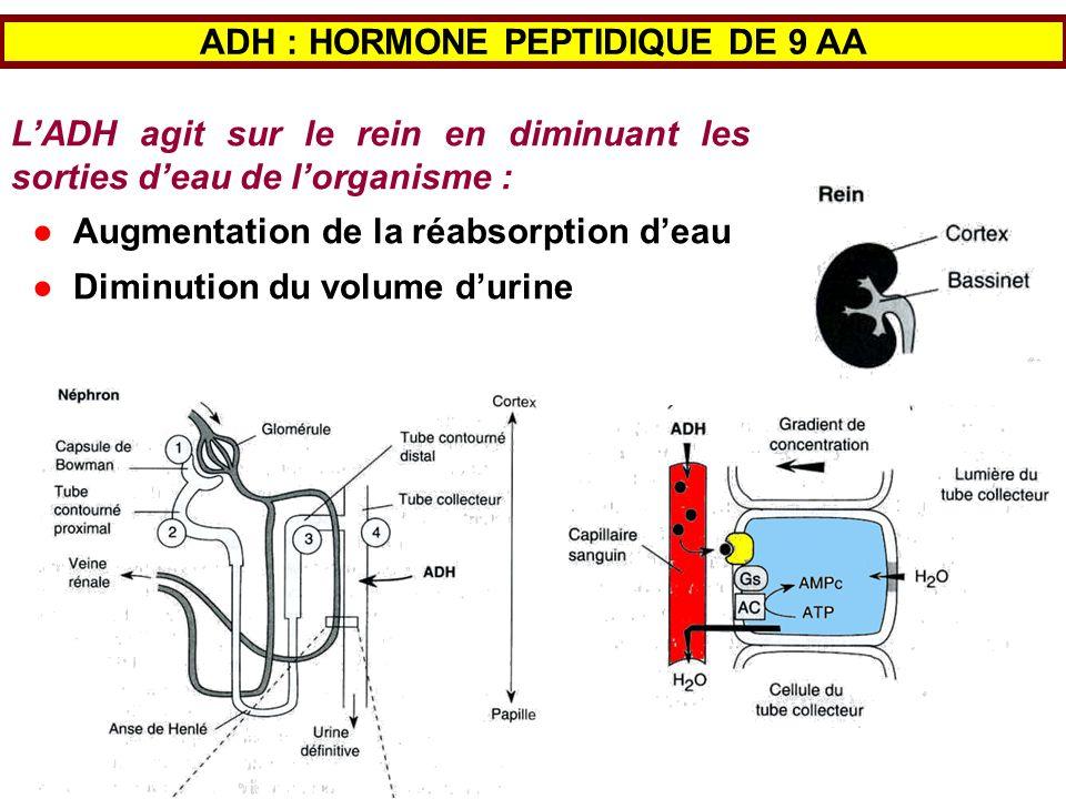 ADH : HORMONE PEPTIDIQUE DE 9 AA