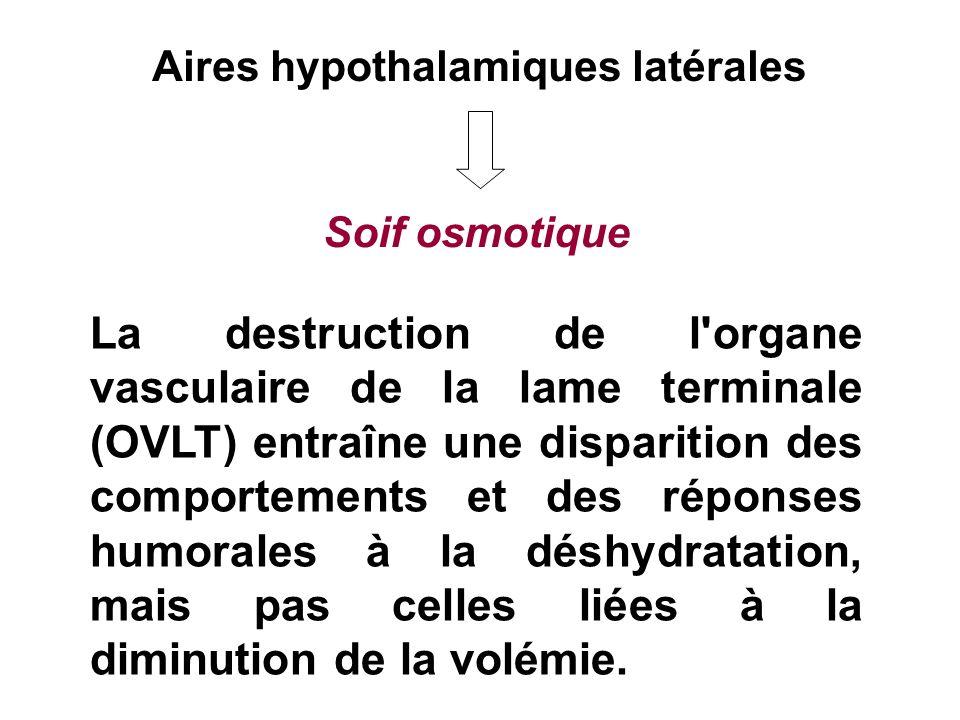 Aires hypothalamiques latérales