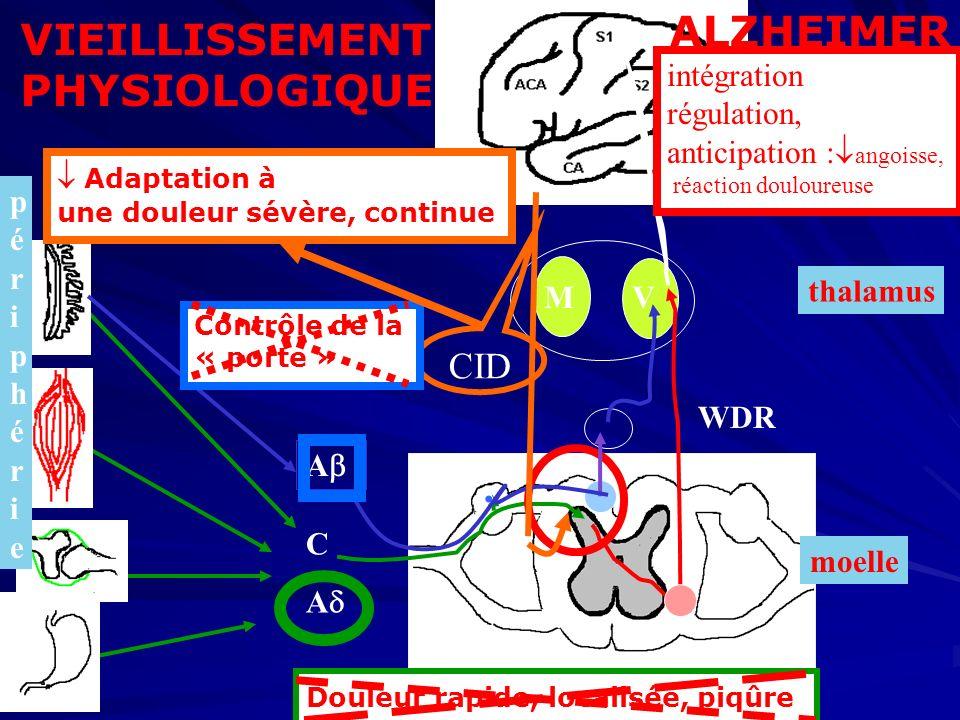 ALZHEIMER VIEILLISSEMENT PHYSIOLOGIQUE CID cortex intégration,