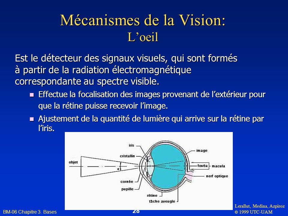 Mécanismes de la Vision: L'oeil