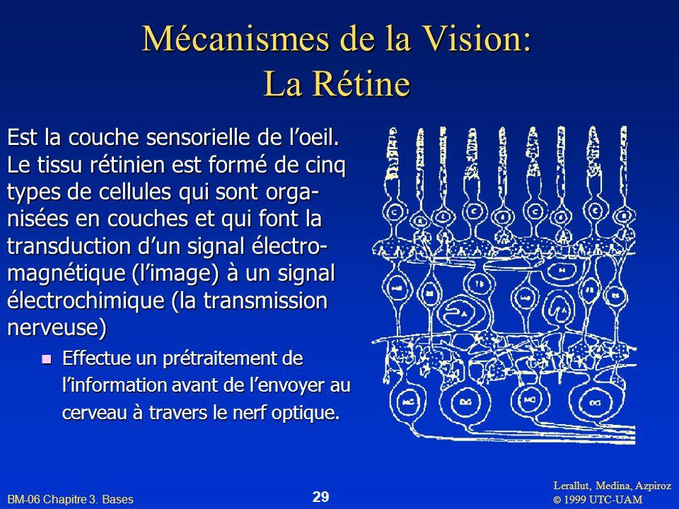 Mécanismes de la Vision: La Rétine