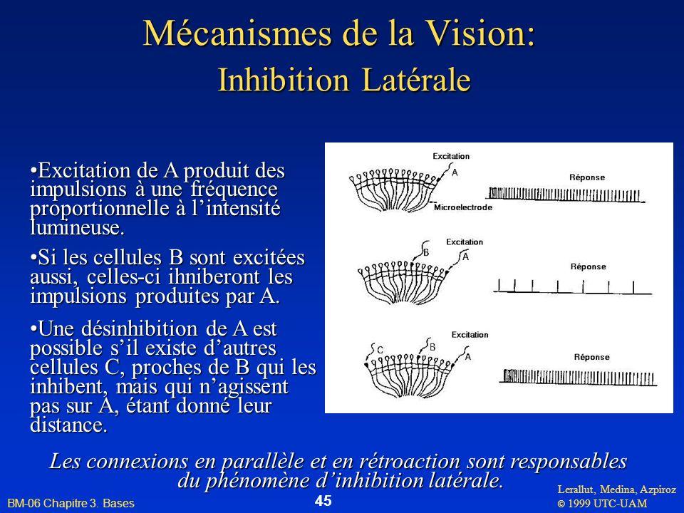 Mécanismes de la Vision: Inhibition Latérale