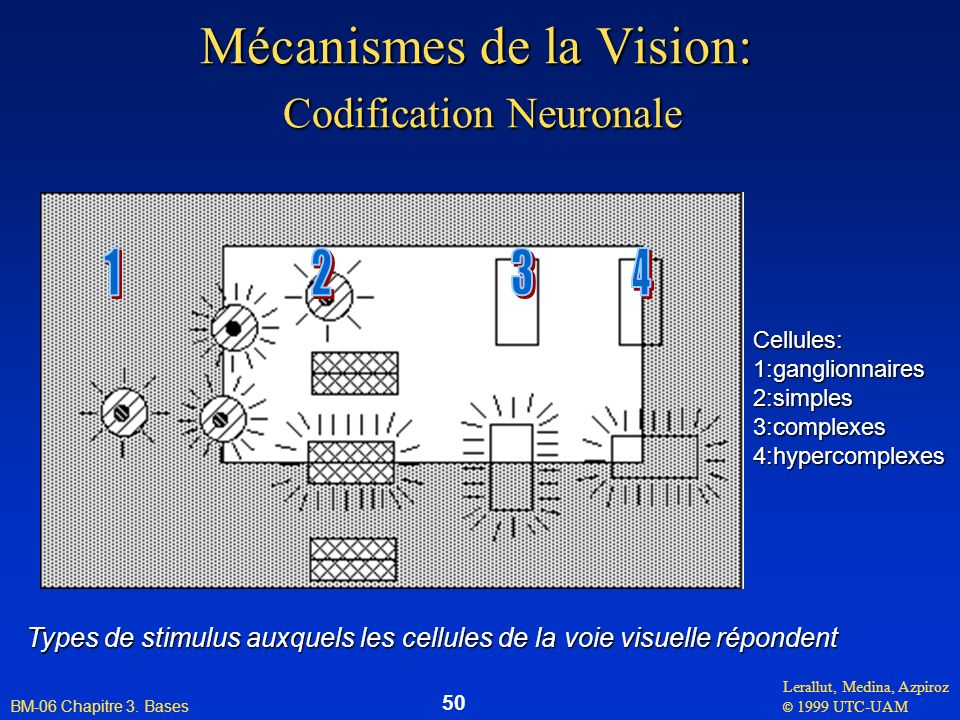 Mécanismes de la Vision: Codification Neuronale