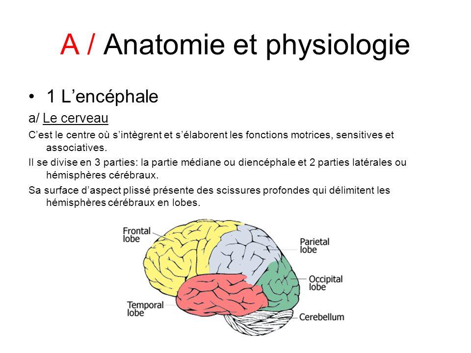 A / Anatomie et physiologie