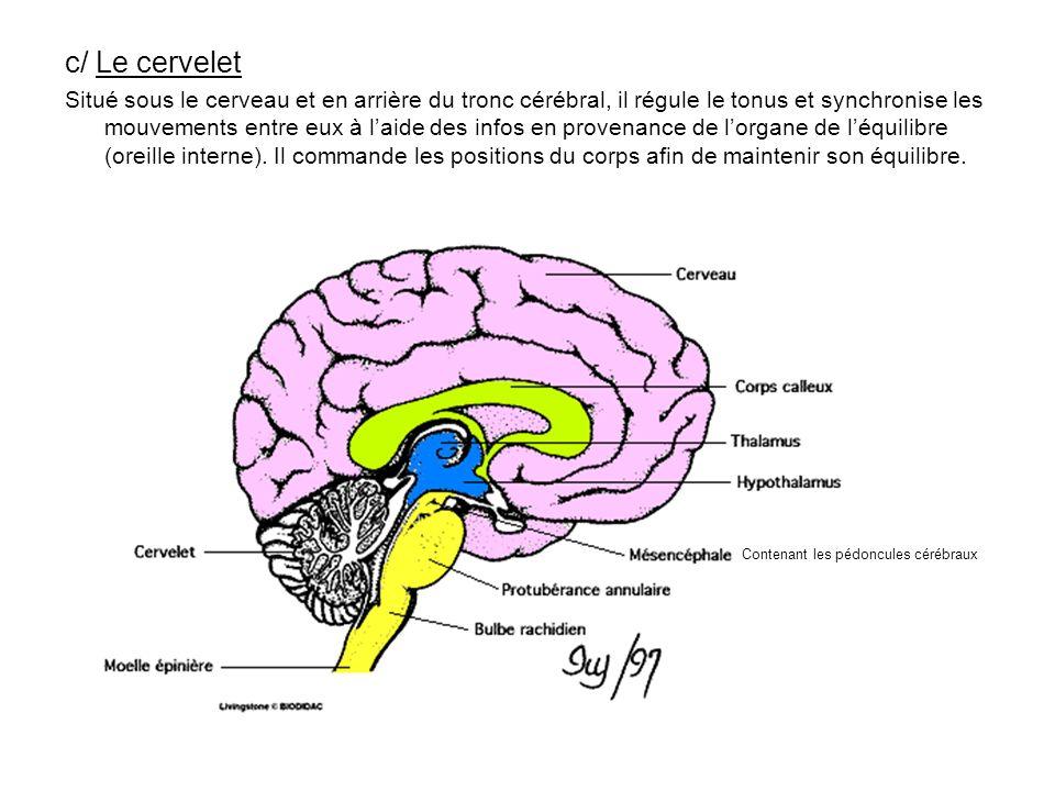 c/ Le cervelet