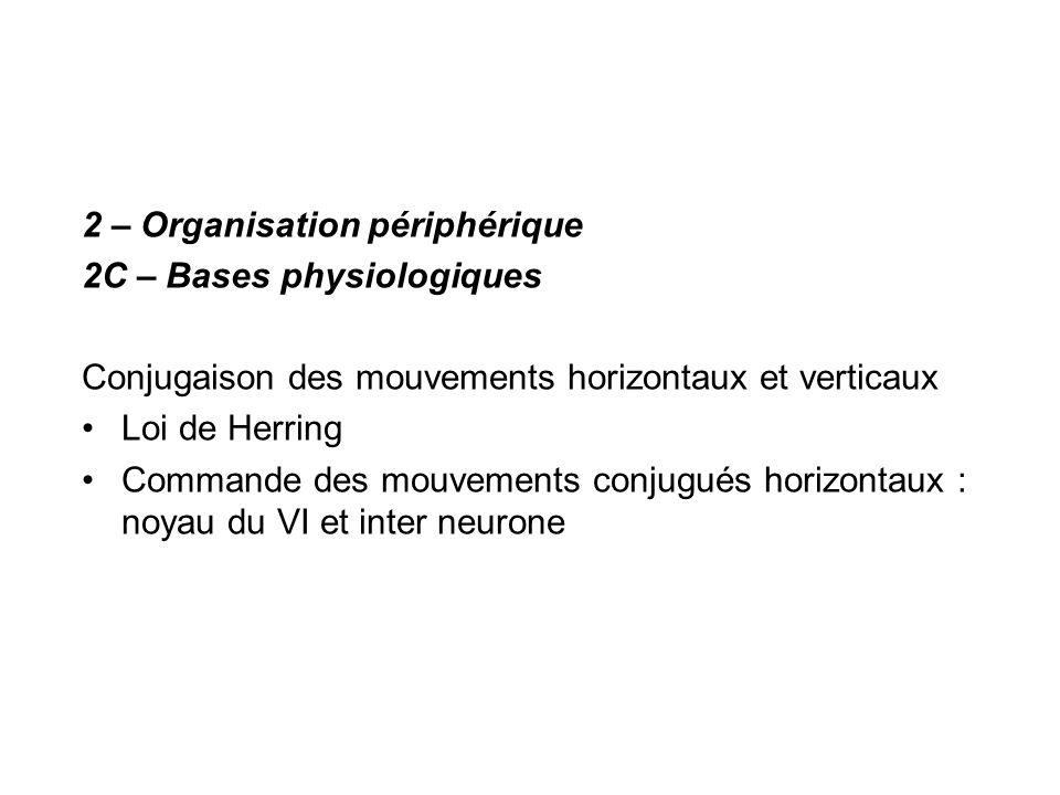 2 – Organisation périphérique