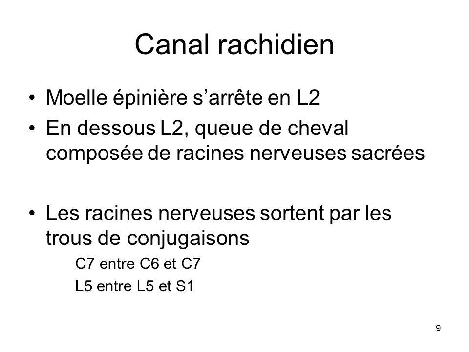 Canal rachidien Moelle épinière s'arrête en L2