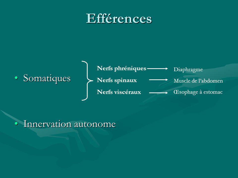 Efférences Somatiques Innervation autonome Nerfs phréniques