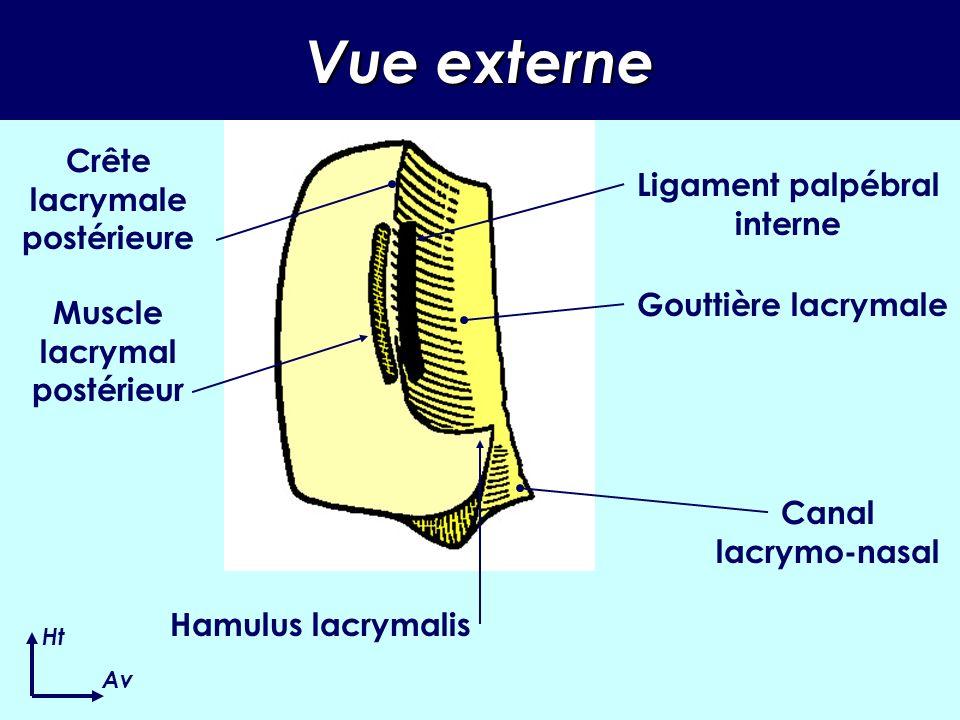 Vue externe Crête lacrymale postérieure Ligament palpébral interne