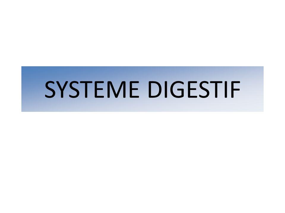 SYSTEME DIGESTIF