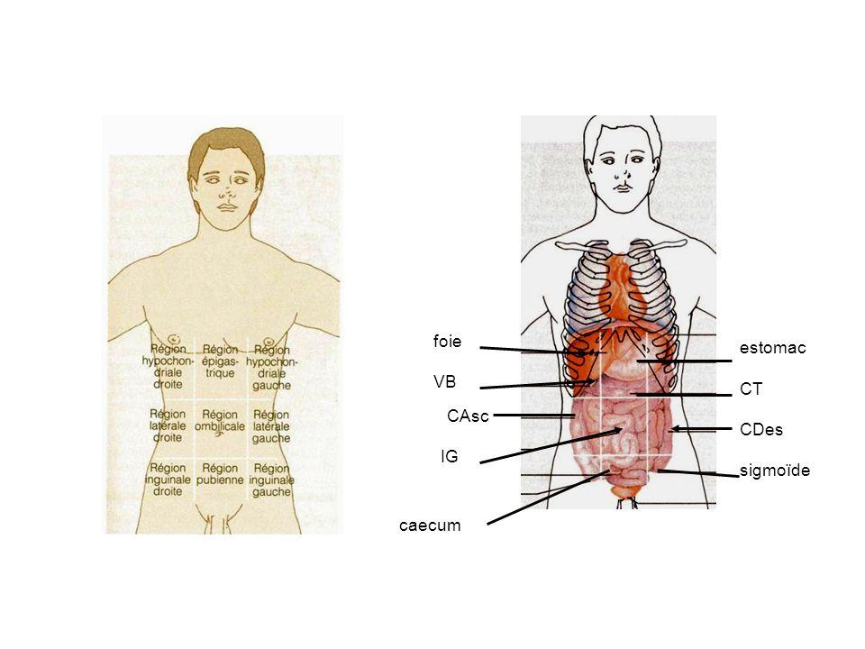 foie estomac VB CT CAsc CDes IG sigmoïde caecum